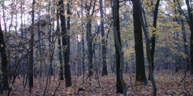 Forstwirtschaftler raten zu nicht heimischen Hoelzern zur Aufforstung 660x330 - Forstwirtschaftler raten zu nicht heimischen Hölzern zur Aufforstung
