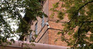 Mehr Ausländer in NRW Gefängnissen 310x165 - Mehr Ausländer in NRW-Gefängnissen