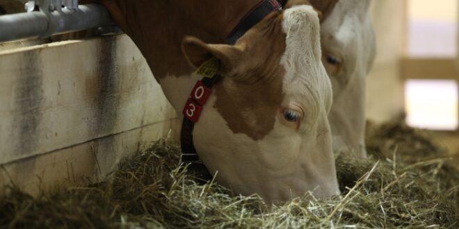 Regierung bringt Gesetzentwurf fuer Tierwohlkennzeichen auf den Weg 660x330 - Regierung bringt Gesetzentwurf für Tierwohlkennzeichen auf den Weg