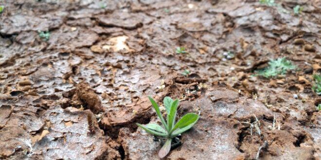 Schlechte Ernte Hofreiter verlangt von Kloeckner Ackerbaustrategie 660x330 - Schlechte Ernte: Hofreiter verlangt von Klöckner Ackerbaustrategie