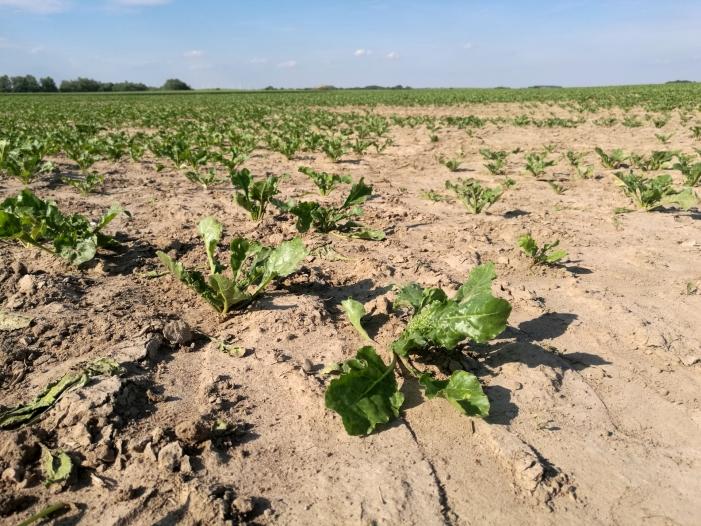 Trotz schlechter Ernte Landwirte wollen keine staatliche Hilfe - Trotz schlechter Ernte: Landwirte wollen keine staatliche Hilfe