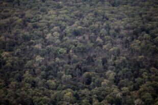 Umweltministerin Schulze fordert Klimaschutzpraemie fuer Waldbesitzer 310x205 - Umweltministerin Schulze fordert Klimaschutzprämie für Waldbesitzer