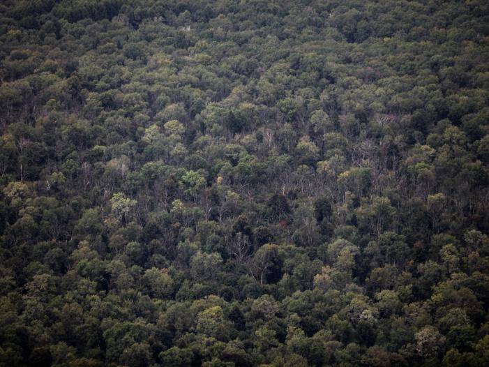 Bild von Umweltministerin Schulze fordert Klimaschutzprämie für Waldbesitzer