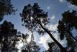 Wald 110x75 - Fürth - mit Baumvielfalt gegen die Klimaerwärmung