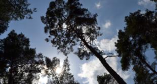 Wald 310x165 - Fürth - mit Baumvielfalt gegen die Klimaerwärmung