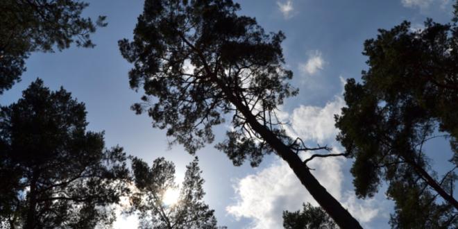 Wald 660x330 - Fürth - mit Baumvielfalt gegen die Klimaerwärmung