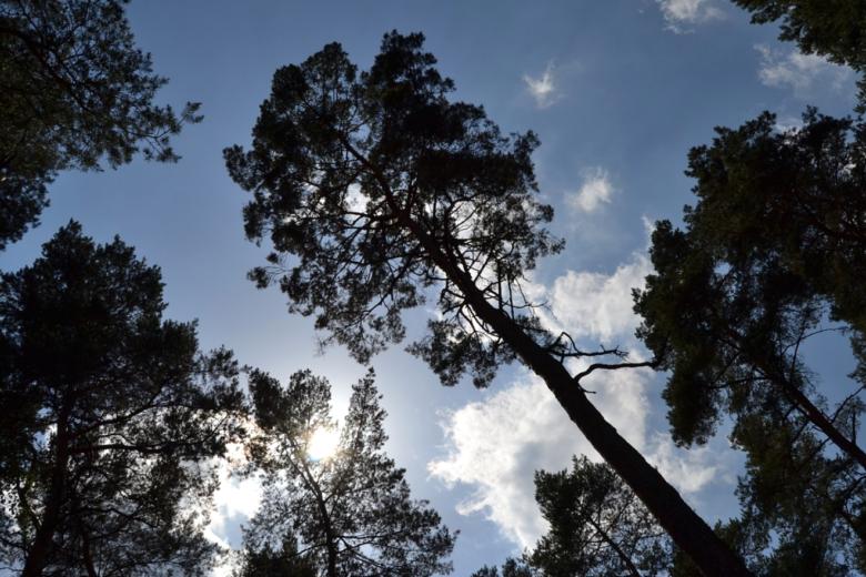 Photo of Fürth – mit Baumvielfalt gegen die Klimaerwärmung