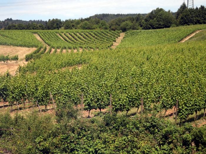 Weinerzeugung im Jahr 2018 deutlich gestiegen - Weinerzeugung im Jahr 2018 deutlich gestiegen