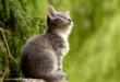 Hauskatze 110x75 - In der Schweiz hat fast jeder Zweite ein Haustier