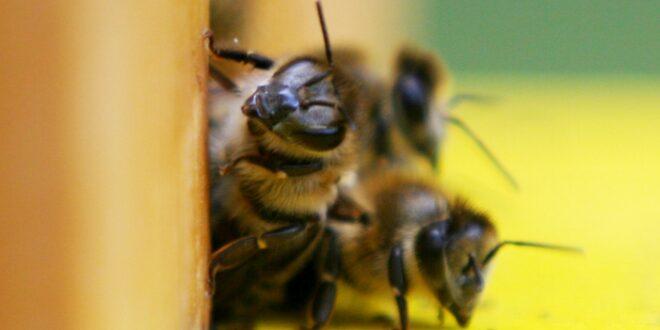 Jede zweite Insektenart schrumpft 660x330 - Jede zweite Insektenart schrumpft