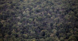 Klöckner stellt Pläne gegen Waldsterben vor 310x165 - Klöckner stellt Pläne gegen Waldsterben vor