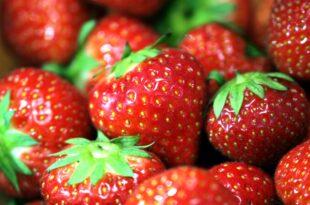 Landwirte entsorgen 10 bis 15 Prozent der essbaren Erdbeeren 310x205 - Landwirte entsorgen 10 bis 15 Prozent der essbaren Erdbeeren
