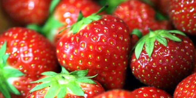 Landwirte entsorgen 10 bis 15 Prozent der essbaren Erdbeeren 660x330 - Landwirte entsorgen 10 bis 15 Prozent der essbaren Erdbeeren