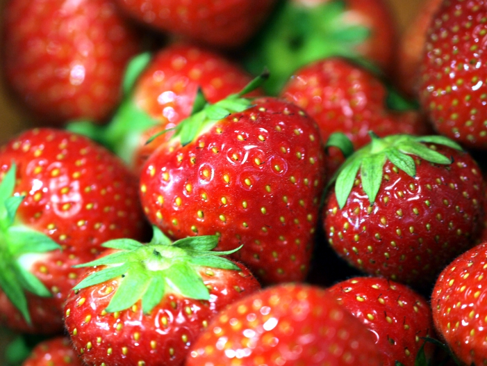 Landwirte entsorgen 10 bis 15 Prozent der essbaren Erdbeeren - Landwirte entsorgen 10 bis 15 Prozent der essbaren Erdbeeren
