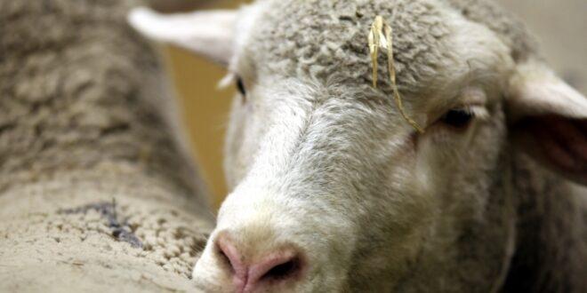 NRW will Fahrzeiten für Tiere begrenzen 660x330 - NRW will Fahrzeiten für Tiere begrenzen