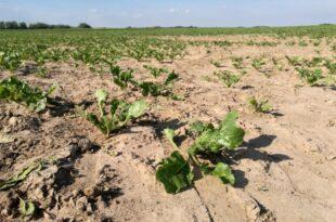 UFZ Dürreperioden beeinträchtigen Land und Forstwirtschaft 310x205 - UFZ: Dürreperioden beeinträchtigen Land- und Forstwirtschaft