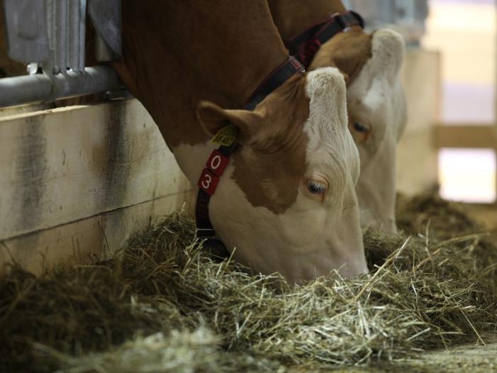 Hofreiter fordert Änderungen im Tierschutzrecht