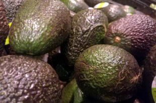 Importe von Avocados deutlich gestiegen 310x205 - Importe von Avocados deutlich gestiegen
