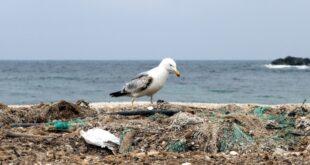 Küstenländer für mehr Einsatz gegen herrenlose Fischernetze im Meer 310x165 - Küstenländer für mehr Einsatz gegen herrenlose Fischernetze im Meer