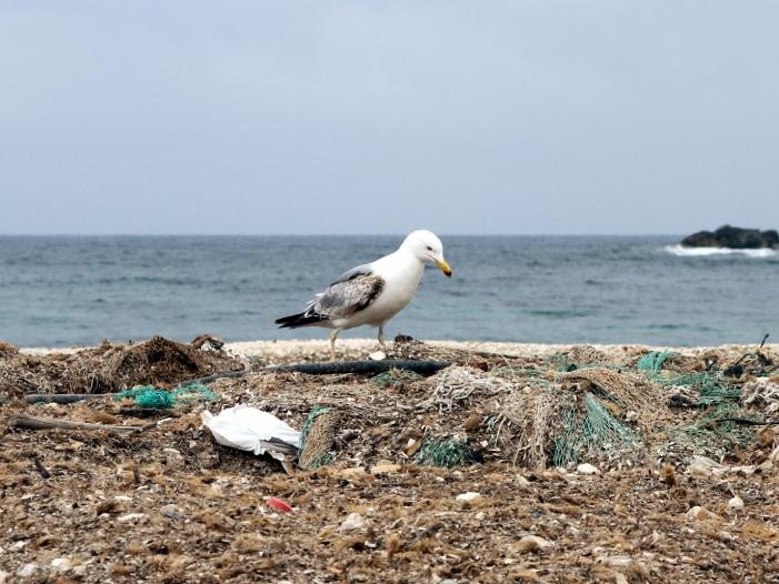 Küstenländer für mehr Einsatz gegen herrenlose Fischernetze im Meer - Küstenländer für mehr Einsatz gegen herrenlose Fischernetze im Meer