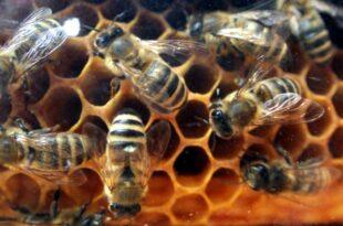 Klöckner und Schulze streiten über Insektenschutz 310x205 - Klöckner und Schulze streiten über Insektenschutz