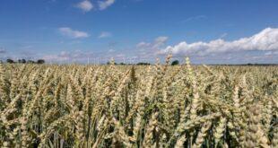 Landwirtschaftsministerium verzögert Glyphosat Ausstieg 310x165 - Landwirtschaftsministerium verzögert Glyphosat-Ausstieg