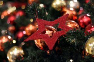 Umfrage Jeder Zehnte kauft seinen Weihnachtsbaum im Internet 310x205 - Umfrage: Jeder Zehnte kauft seinen Weihnachtsbaum im Internet