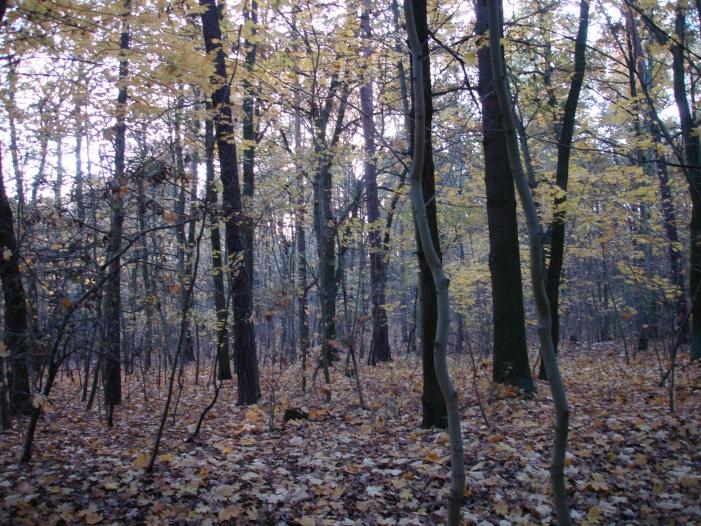Waldbeauftragter Bürger sollen sich an Aufforstung beteiligen - Waldbeauftragter: Bürger sollen sich an Aufforstung beteiligen
